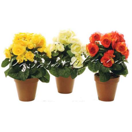доставка цветов Москва, цветы Москва, купить цветы в Москве, цветы недорого Москва, заказать цветы Москва, цветы, Москва, доставка, бегония цветущая, бегония, горшечные растения