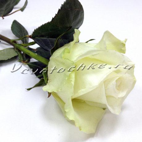 доставка цветов Москва, цветы Москва, купить цветы в Москве, цветы недорого Москва, заказать цветы Москва, цветы, Москва, доставка, роза поштучно, белая роза поштучно