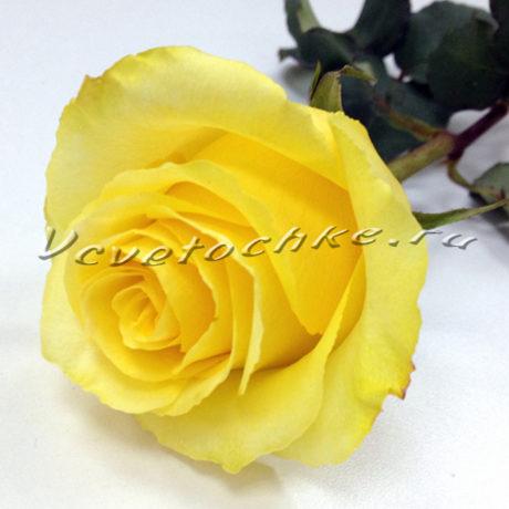 доставка цветов Москва, цветы Москва, купить цветы в Москве, цветы недорого Москва, заказать цветы Москва, цветы, Москва, доставка, роза поштучно, желтая роза поштучно
