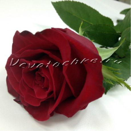 доставка цветов Москва, цветы Москва, купить цветы в Москве, цветы недорого Москва, заказать цветы Москва, цветы, Москва, доставка, роза поштучно, красная роза поштучно