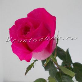доставка цветов Москва, цветы Москва, купить цветы в Москве, цветы недорого Москва, заказать цветы Москва, цветы, Москва, доставка, роза поштучно, розовая роза поштучно