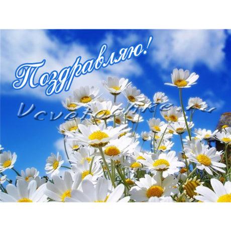 доставка цветов Москва, цветы Москва, купить цветы в Москве, цветы недорого Москва, заказать цветы Москва, цветы, Москва, доставка, открытка, поздравительная открытка