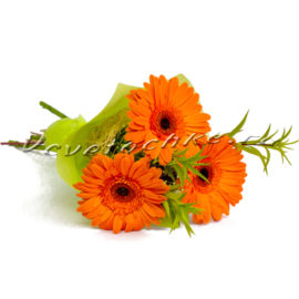 доставка цветов Москва, цветы Москва, купить цветы в Москве, цветы недорого Москва, заказать цветы Москва, цветы, Москва, доставка, гербера, букет, букет из гербер