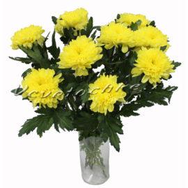 доставка цветов Москва, цветы Москва, купить цветы в Москве, цветы недорого Москва, заказать цветы Москва, цветы, Москва, доставка, хризантема, желтая хризантема, букет, букет хризантем