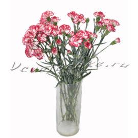 доставка цветов Москва, цветы Москва, купить цветы в Москве, цветы недорого Москва, заказать цветы Москва, цветы, Москва, доставка, гвоздика, кустовая гвоздика, букет гвоздик