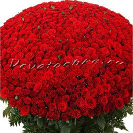 доставка цветов Москва, цветы Москва, купить цветы в Москве, цветы недорого Москва, заказать цветы Москва, цветы, Москва, доставка, роза, красная роза, 501 роза, 501 красная роза, букет роз, vip