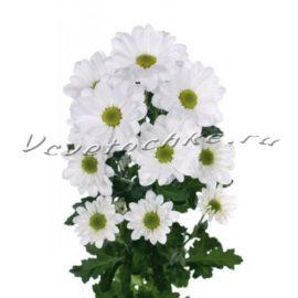 доставка цветов Москва, цветы Москва, купить цветы в Москве, цветы недорого Москва, заказать цветы Москва, цветы, Москва, доставка, хризантема, кустовая хризантема, белая хризантема, бакарди, хризантема бакарди