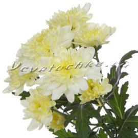 доставка цветов Москва, цветы Москва, купить цветы в Москве, цветы недорого Москва, заказать цветы Москва, цветы, Москва, доставка, хризантема, кустовая хризантема, кремовая хризантема