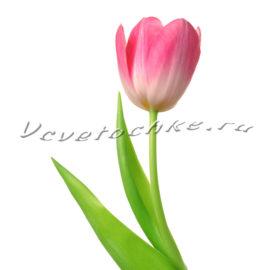 доставка цветов Москва, цветы Москва, купить цветы в Москве, цветы недорого Москва, заказать цветы Москва, цветы, Москва, доставка, тюльпаны, розовый тюльпан, тюльпаны поштучно
