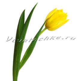 доставка цветов Москва, цветы Москва, купить цветы в Москве, цветы недорого Москва, заказать цветы Москва, цветы, Москва, доставка, доставка, букет, тюльпаны, желтые тюльпаны, поштучно, тюльпаны поштучно