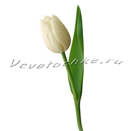 доставка цветов Москва, цветы Москва, купить цветы в Москве, цветы недорого Москва, заказать цветы Москва, цветы, Москва, доставка, доставка, букет, тюльпаны, белые тюльпаны, поштучно, тюльпаны поштучно