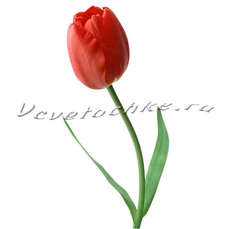 доставка цветов Москва, цветы Москва, купить цветы в Москве, цветы недорого Москва, заказать цветы Москва, цветы, Москва, доставка, букет, тюльпаны, красный тюльпаны, поштучно, тюльпаны поштучно