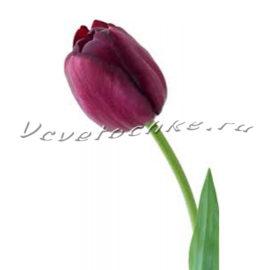 доставка цветов Москва, цветы Москва, купить цветы в Москве, цветы недорого Москва, заказать цветы Москва, цветы, Москва, доставка, букет, тюльпаны, фиолетовые тюльпаны
