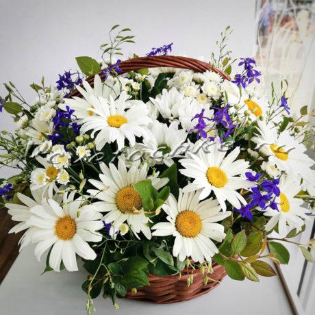 доставка цветов Москва, цветы Москва, купить цветы в Москве, цветы недорого Москва, заказать цветы Москва, цветы, Москва, доставка, букет, корзина, ромашка, корзина ромашек, белая ромашка